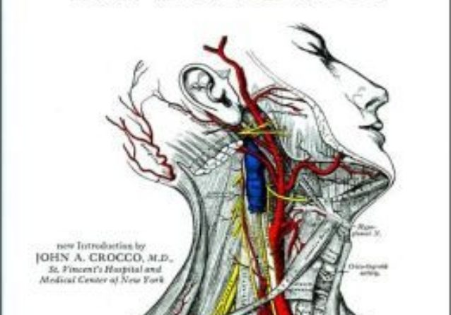 Gray's Anatomy PDF